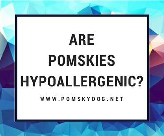Are Pomskies Hypoallergenic?