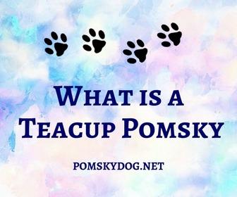 Teacup Pomsky
